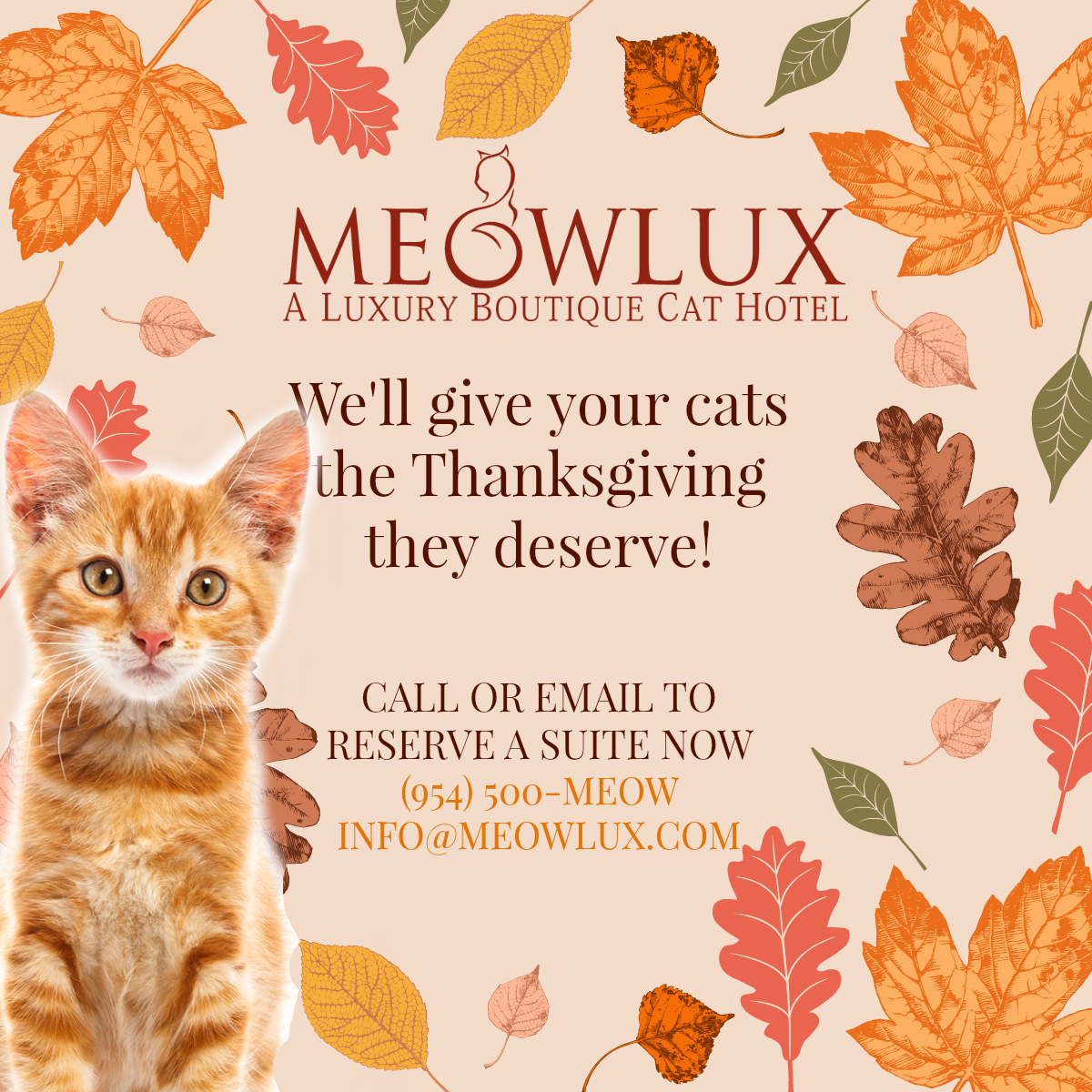 Thanksgiving at MeowLux Cat Hotel